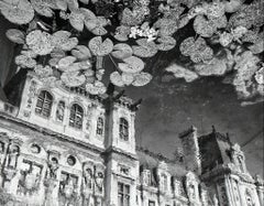 Lilies in the Sky - Black & white lily pad landscape reflection in water