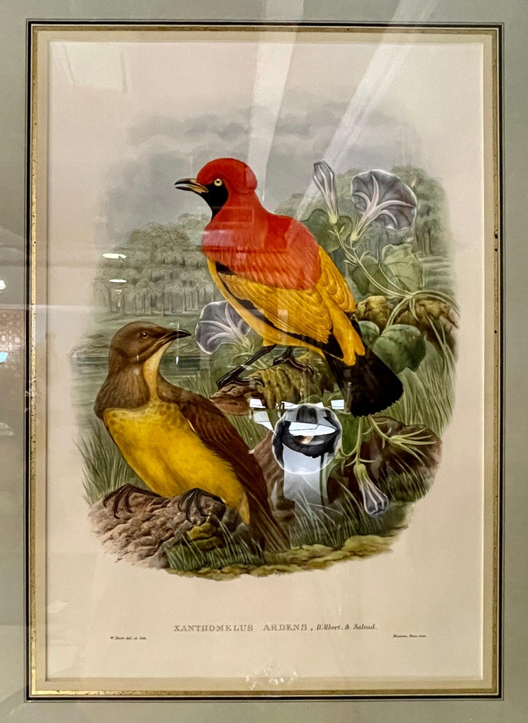 A fine pair of large lithographs. Each depicting colorful birds perched upon a branch. Both custom matted and placed in a Fine water gilt gold wooden frame. Signed and titled.