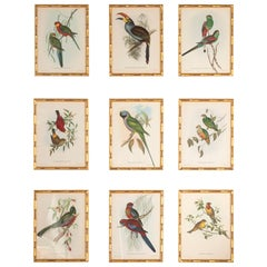 Fine Set of 9 Exotic Birds