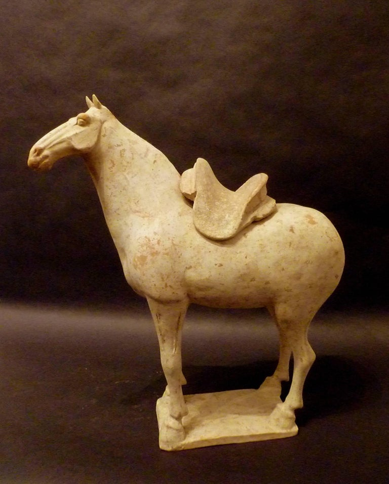 Chinese Fine Tang Dynasty Pottery Horse, TL Tested For Sale