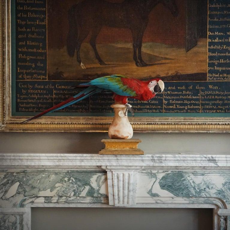 Fine Taxidermy Red-and-Green Macaw II by Sinke & Van Tongeren For Sale 6