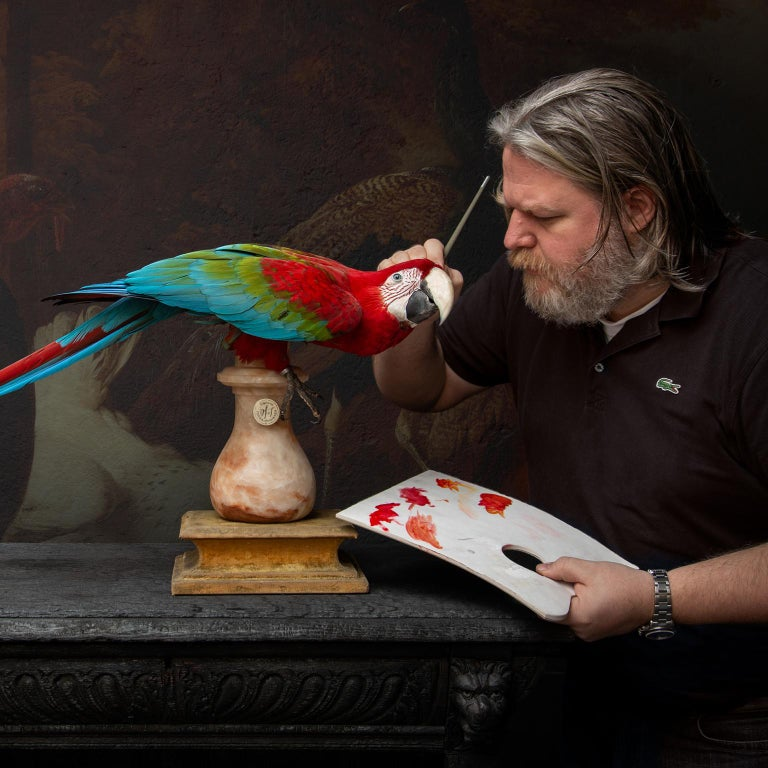 Contemporary Fine Taxidermy Red-and-Green Macaw II by Sinke & Van Tongeren For Sale