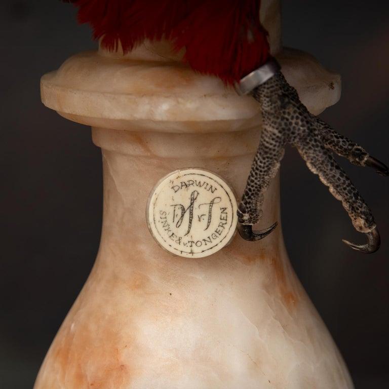 Fine Taxidermy Red-and-Green Macaw II by Sinke & Van Tongeren For Sale 2