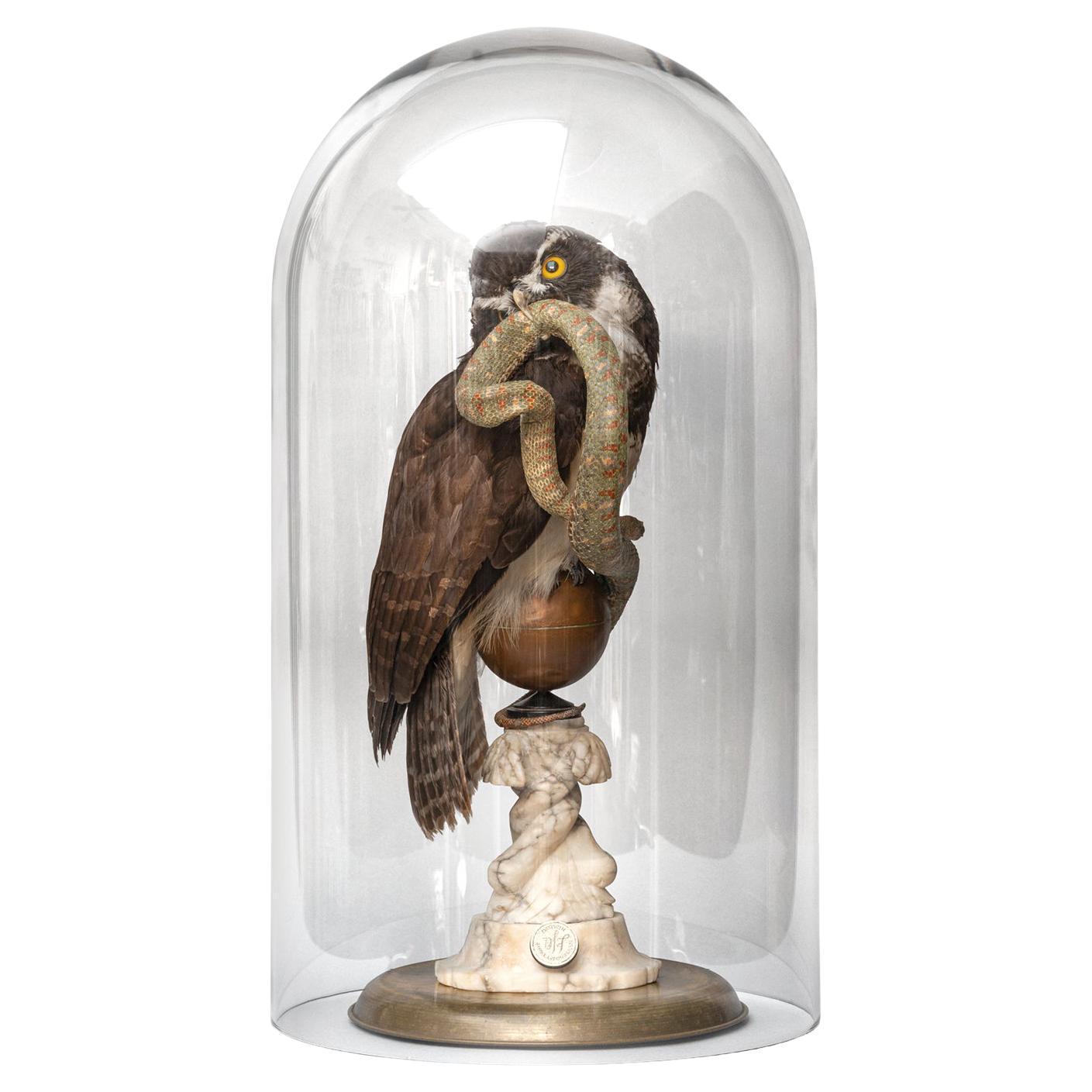 Fine Taxidermy The Spectacled Owl & Snake by Sinke & Van Tongeren