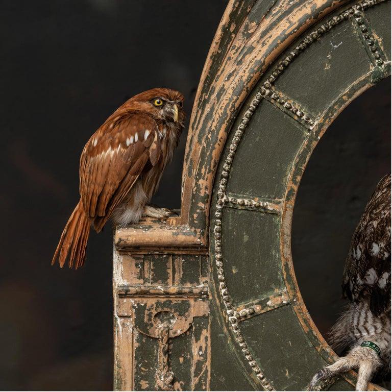 Fine Taxidermy Tower of Owls by Sinke & Van Tongeren For Sale 3
