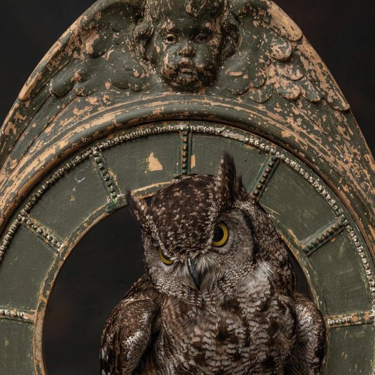Fine Taxidermy Tower of Owls by Sinke & Van Tongeren For Sale 4