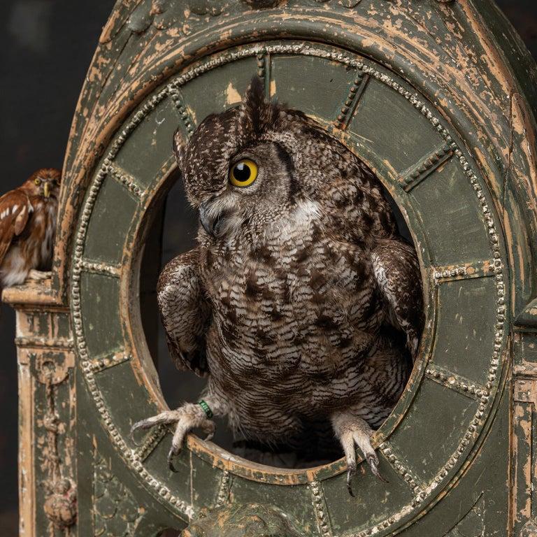 Fine Taxidermy Tower of Owls by Sinke & Van Tongeren For Sale 6
