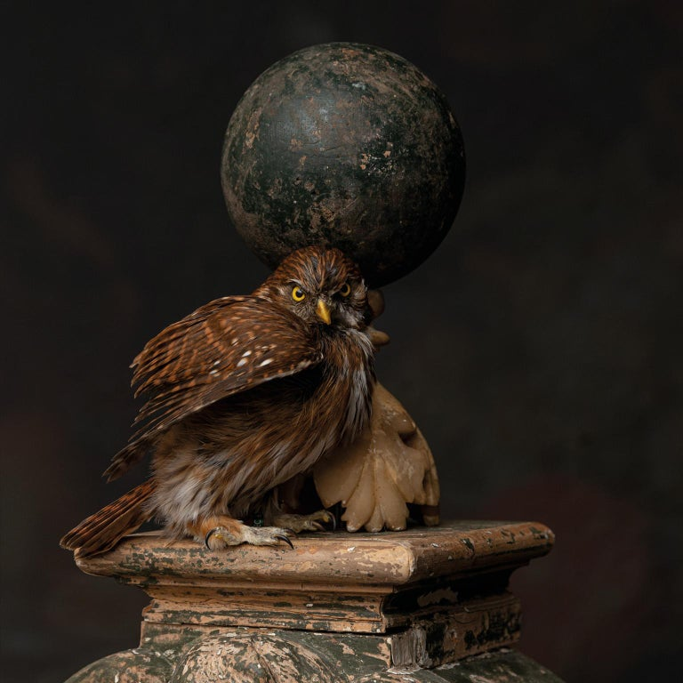 Contemporary Fine Taxidermy Tower of Owls by Sinke & Van Tongeren For Sale