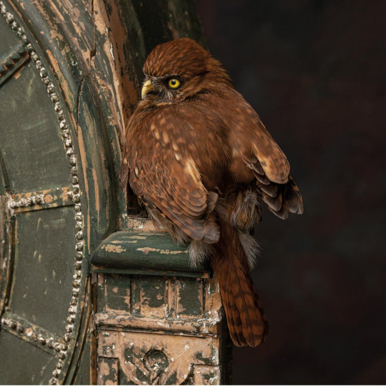Fine Taxidermy Tower of Owls by Sinke & Van Tongeren For Sale 2