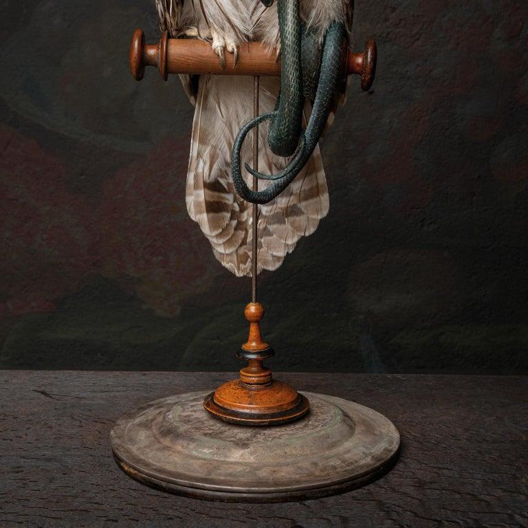 Fine Taxidermy Ural Owl & Black Mamba by Sinke & Van Tongeren 3