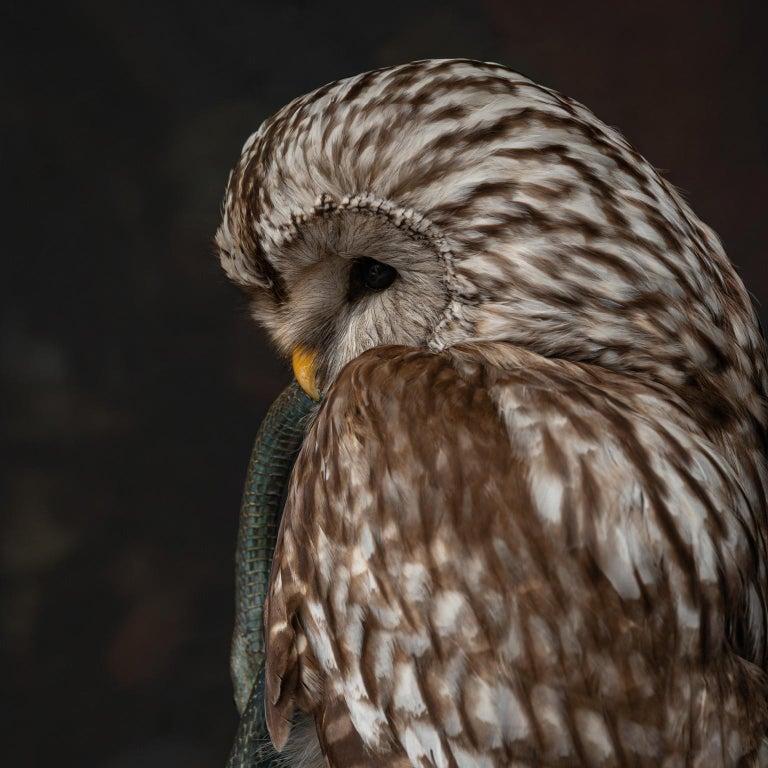 Fine Taxidermy Ural Owl & Black Mamba by Sinke & Van Tongeren 4