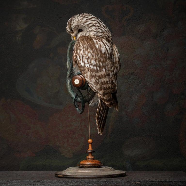 Fine Taxidermy Ural Owl & Black Mamba by Sinke & Van Tongeren 5