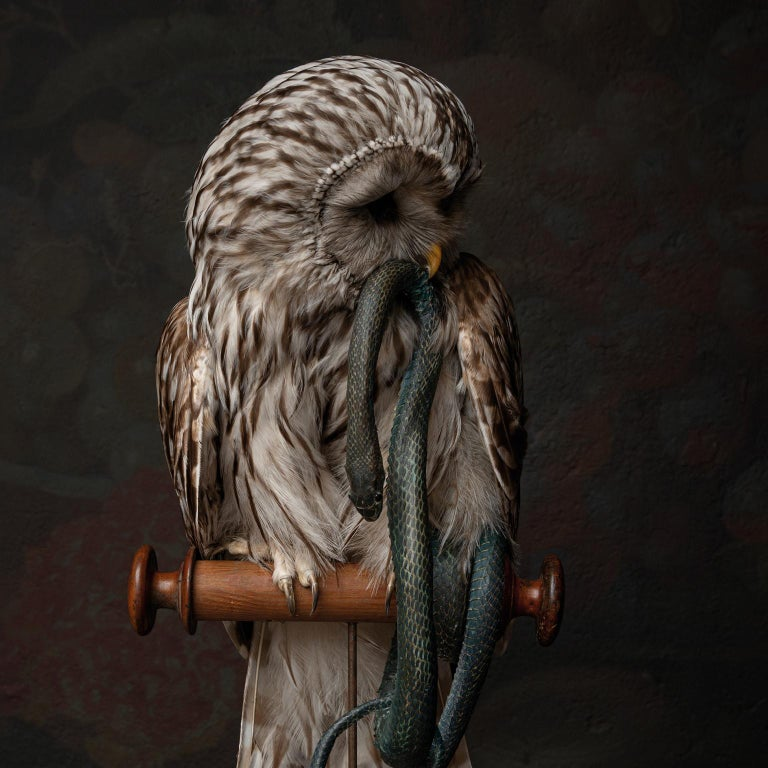 Fine Taxidermy Ural Owl & Black Mamba by Sinke & Van Tongeren 6