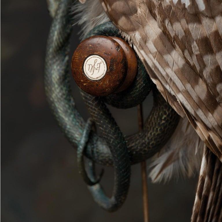 Fine Taxidermy Ural Owl & Black Mamba by Sinke & Van Tongeren 8
