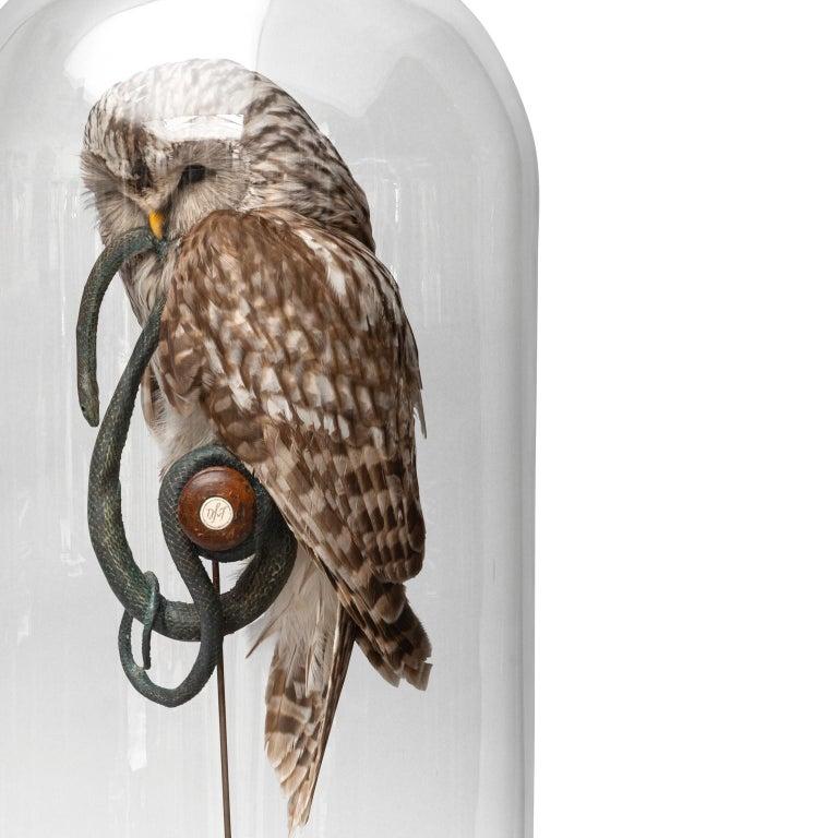 Fine Taxidermy Ural Owl & Black Mamba by Sinke & Van Tongeren 9