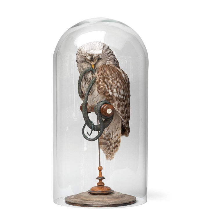 Fine Taxidermy Ural Owl & Black Mamba by Sinke & Van Tongeren 10