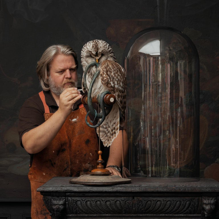 The Ural Owl is a very strong species of owls. It is also referred to as the Russian Owl. This owl hunts under harsh circumstances. Either it is the extreme colds in winter, or it is the lack of darkness during the northern summers. Because this owl