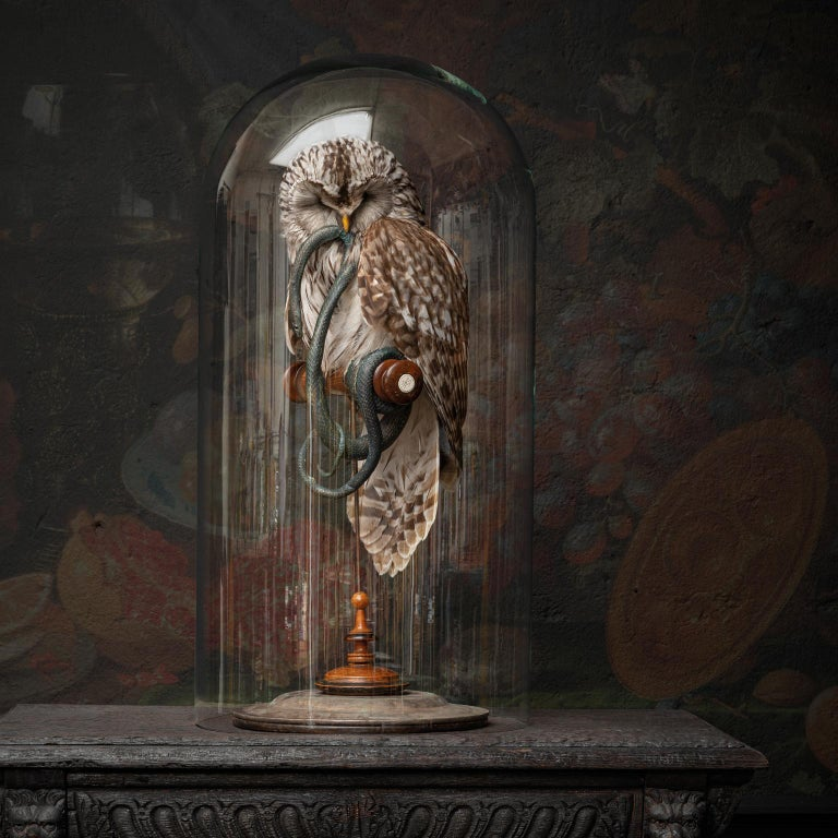 Victorian Fine Taxidermy Ural Owl & Black Mamba by Sinke & Van Tongeren