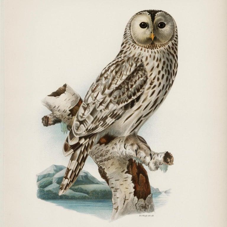 Fine Taxidermy Ural Owl & Black Mamba by Sinke & Van Tongeren In Excellent Condition In Haarlem, NL