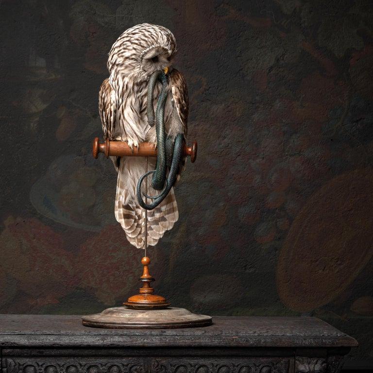Contemporary Fine Taxidermy Ural Owl & Black Mamba by Sinke & Van Tongeren