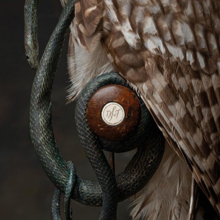 Animal Skin Fine Taxidermy Ural Owl & Black Mamba by Sinke & Van Tongeren