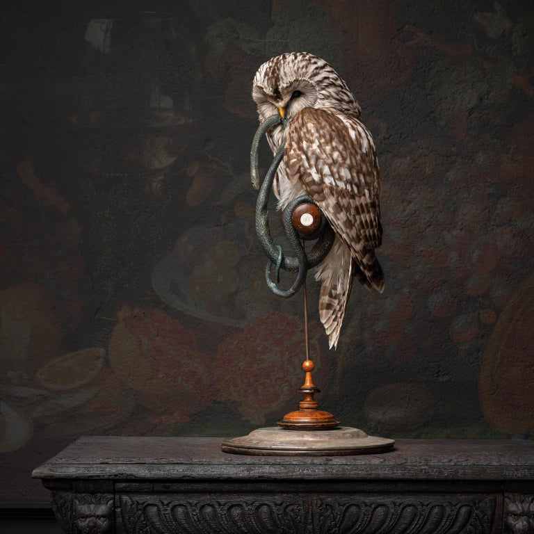 Fine Taxidermy Ural Owl & Black Mamba by Sinke & Van Tongeren 1