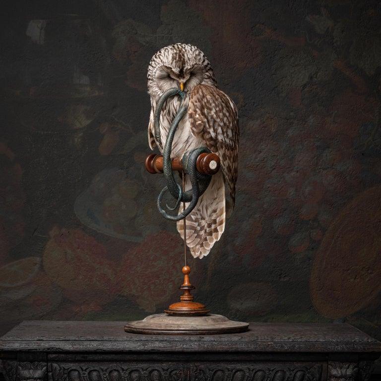 Fine Taxidermy Ural Owl & Black Mamba by Sinke & Van Tongeren 2