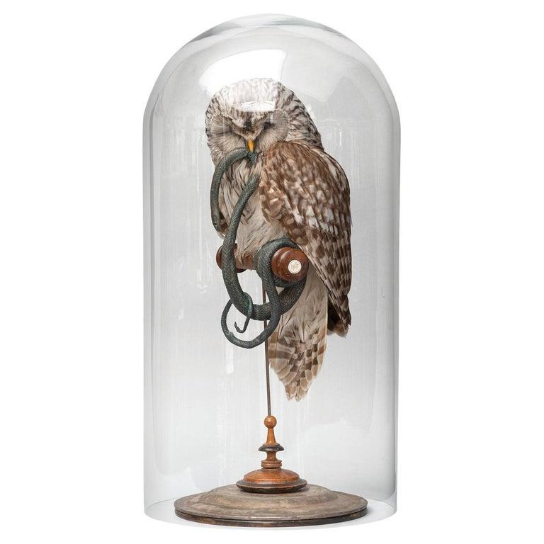 Fine Taxidermy Ural Owl & Black Mamba by Sinke & Van Tongeren