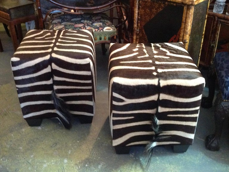 South African Fine Zebra Ottomans For Sale
