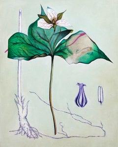 Death Flower Birth Root
