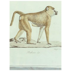 Louis XVI Drawings