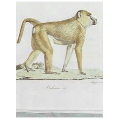 Five 19th Century Unframed Monkey Engravings Jean-Charles Werner
