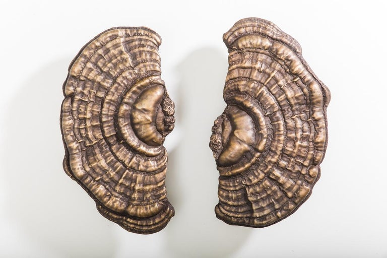 New York-based contemporary sculptor Erin Sullivan employs the labor-intensive lost-wax process to create exquisite, realistic bronze interpretations of her organic subject matter.  The work expresses ideas of time and memory, constant themes in