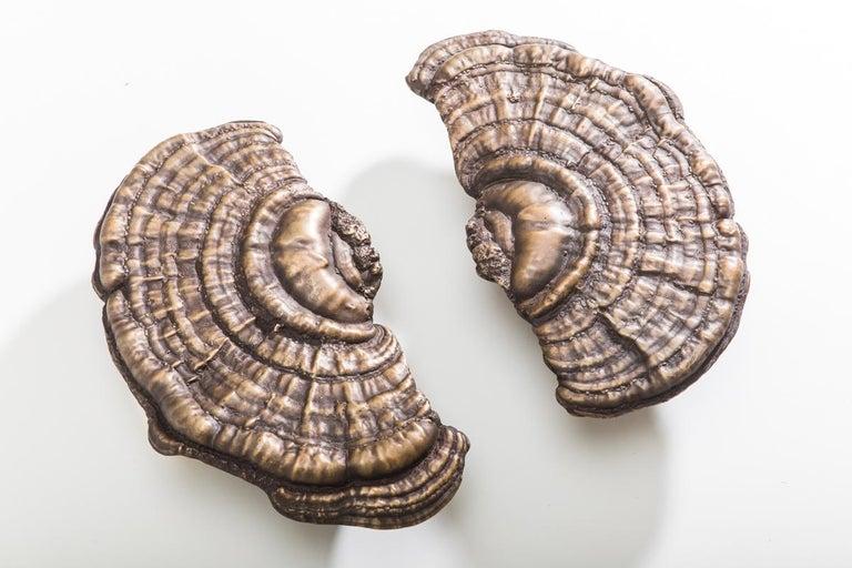 Flora Series, Bronze Mushroom Door Pulls, USA For Sale 1