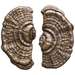 Flora Series, Bronze Mushroom Door Pulls, USA
