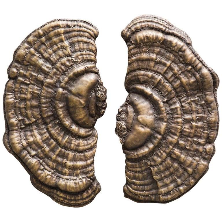 Flora Series, Bronze Mushroom Door Pulls, USA For Sale