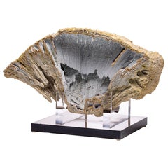 Florida Agatized Fossil Coral on Custom Acrylic Stand