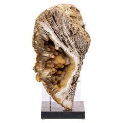 Florida Agatized Fossil Coral on Custom Acrylic Stand