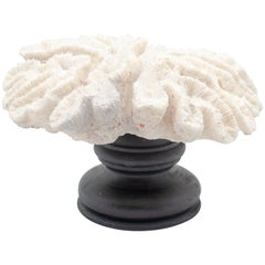 Flower Coral Mounted