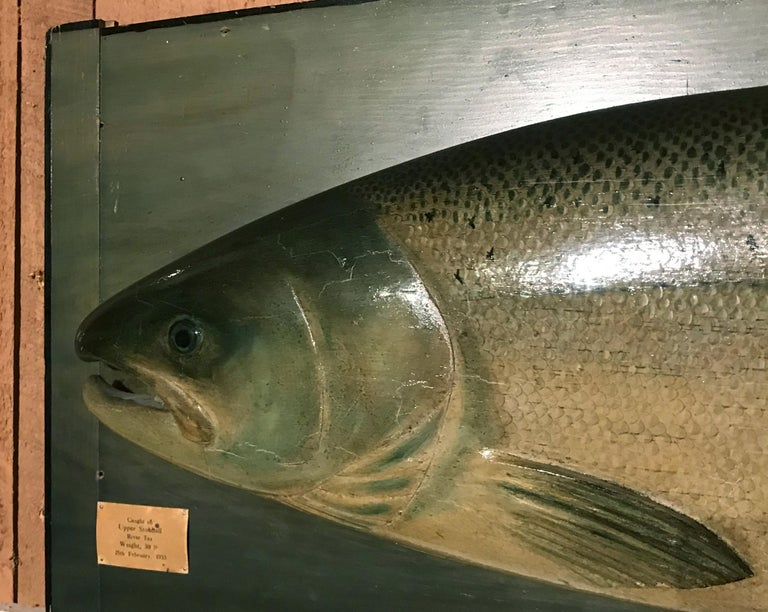 This is an exact model of a 30 pound salmon caught in 1933 in the famous Upper Stobhall Beat on the river Tay by the renowned firm of P.D. Malloch, a famous old time tackle shop in Perth which employed Scottish model makers who would create exact