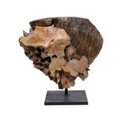 Fossil Alaska Mammoth Tooth Mounted on Metal Base