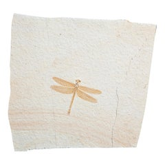 Fossil Dragonfly Dating 150 Million Years Old
