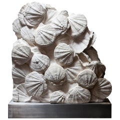 Fossil Scallop Shell Bed from France, 20 Million Years Old