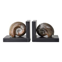 Fossiline Brown Shell Bookends by Nino Basso