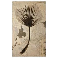 Fossilised Palm Plate