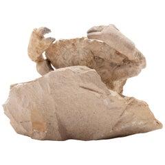 Fossilized Crab Specimen, Eocene Period, Italy