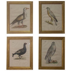 Four 19th Century Lithograph Plate 'The Naturalist Atlas' by H. v. Hirt