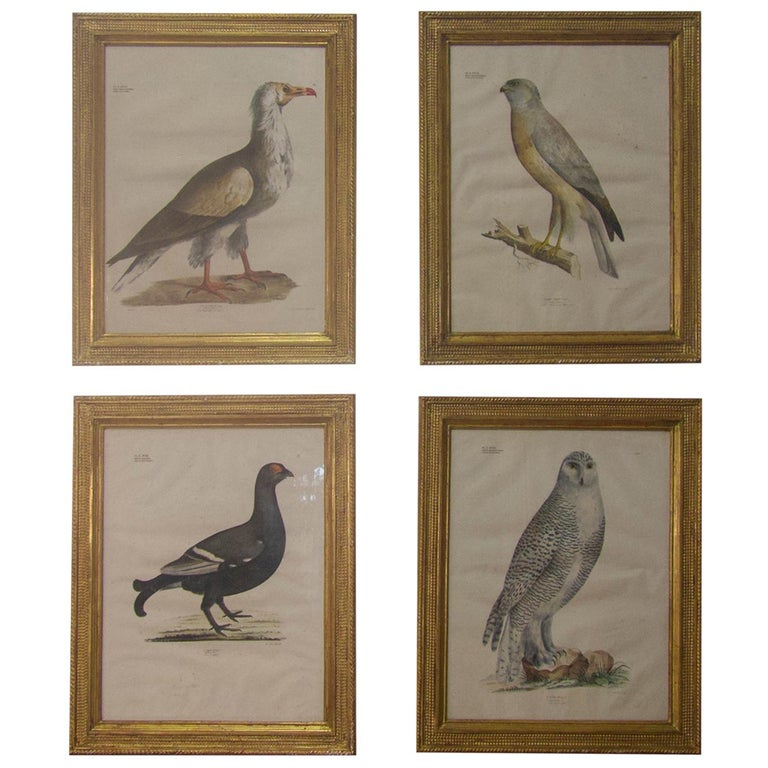 Four 19th Century Lithograph Plate 'The Naturalist Atlas' by H. v. Hirt For Sale