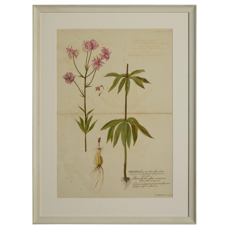 Four Botanical Watercolors