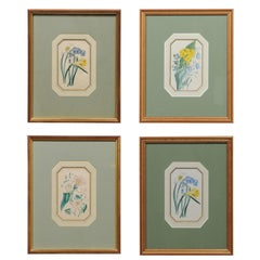 Four English 20th Century Botanical Prints with Yellow, Blue and White Flowers